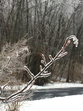 frozen reed