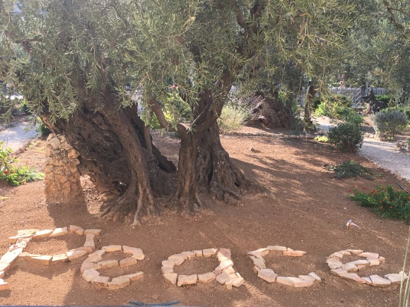 Garden of Gethsemane peace
